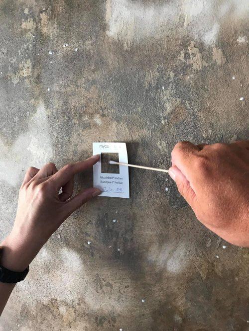 Test af skadelige skimmelsvampe